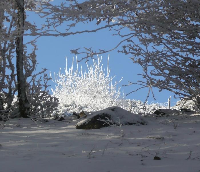 neige 2 (1)